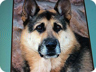 German Shepherd Dog Dog for adoption in Los Angeles, California - ROSCOE VON ADELMAR