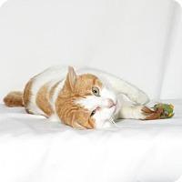 Adopt A Pet :: Felix - Lufkin, TX