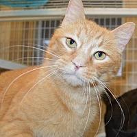 Adopt A Pet :: Walmart - Ashtabula, OH