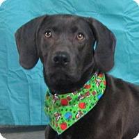 Adopt A Pet :: Adele - LaGrange, KY