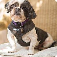Adopt A Pet :: Dustin - Tallahassee, FL