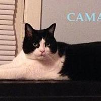 Adopt A Pet :: Camarade - Montreal, QC