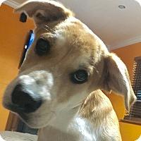 Adopt A Pet :: CB - Danbury, CT