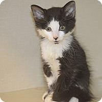 Adopt A Pet :: Pluto - San Leon, TX