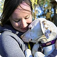 Adopt A Pet :: Chloe-Illinois - Wood Dale, IL