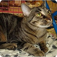 Adopt A Pet :: Missy - Chesapeake, VA