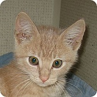 Adopt A Pet :: PAUL aka PJ - 2013 - Hamilton, NJ