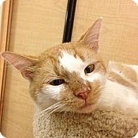 Adopt A Pet :: Rusty - Monroe, GA