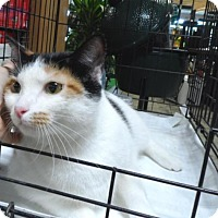 Adopt A Pet :: Candy - Pensacola, FL