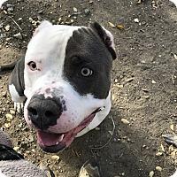 Adopt A Pet :: Buda - West Hills, CA