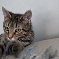 Adopt A Pet :: Carter - Covington, PA