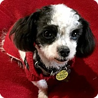 Adopt A Pet :: Greg Gutfeld - Euless, TX