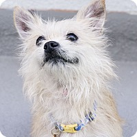 Adopt A Pet :: ELFIE - Los Angeles, CA