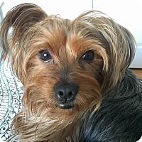 Adopt A Pet :: Fred - Atlanta, GA