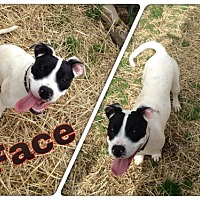 Adopt A Pet :: Face - Madison, AL