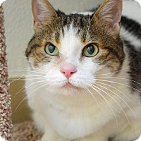 Adopt A Pet :: Zoe - Dublin, CA