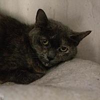 Adopt A Pet :: Smokey - Lancaster, PA