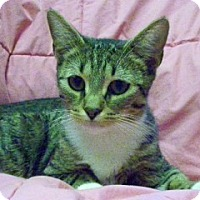Adopt A Pet :: Matilda Zeta - Rochester, NY