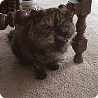 Adopt A Pet :: Delilah - Beverly Hills, CA