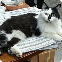 Adopt A Pet :: Rooney - Edmond, OK