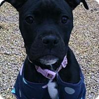 Adopt A Pet :: Salma - Phoenix, AZ