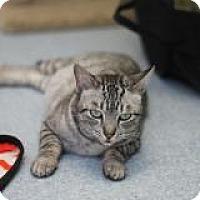 Adopt A Pet :: Luna - El Cajon, CA