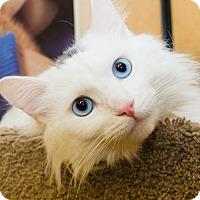 Adopt A Pet :: Snow - Irvine, CA