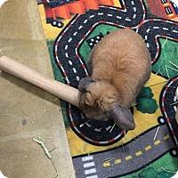 Adopt A Pet :: Dom - Williston, FL