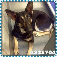 Adopt A Pet :: NINA - SAN ANTONIO, TX