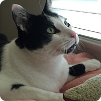 Adopt A Pet :: Tippi - Laguna Woods, CA
