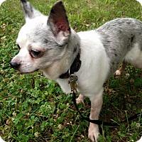 Adopt A Pet :: Junior - Bridgewater, NJ