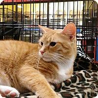 Adopt A Pet :: Rita - Columbus, OH