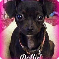 Adopt A Pet :: Dolly - Anaheim Hills, CA