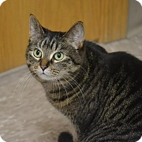 Adopt A Pet :: Love - Byron Center, MI