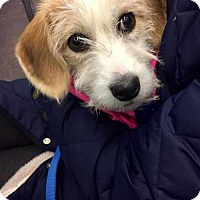 Adopt A Pet :: Agnes Smith - Brooklyn, NY