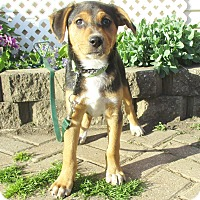 Adopt A Pet :: Ginata - West Chicago, IL