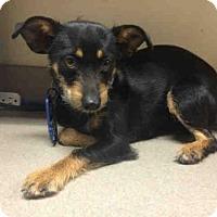 Adopt A Pet :: BRIDGET - San Diego, CA