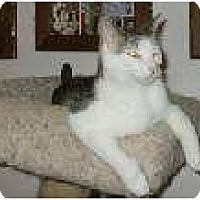 Adopt A Pet :: Daisey - Henderson, KY