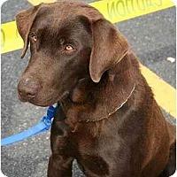 Adopt A Pet :: Spencer - Cumming, GA