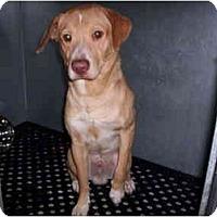 Adopt A Pet :: Danny - Forest Hills, NY