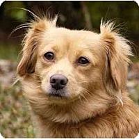 Adopt A Pet :: Lynne - Mocksville, NC