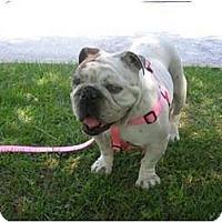 Adopt A Pet :: Pancake - Winder, GA