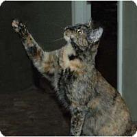 Adopt A Pet :: Cinder - Chula Vista, CA