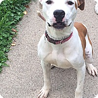 Adopt A Pet :: Butch - Chicago, IL