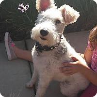 Adopt A Pet :: Roxy - Crystal River, FL