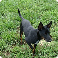 Adopt A Pet :: Billy - Rosalia, KS
