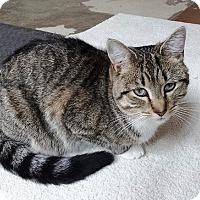 Adopt A Pet :: DC - Nolensville, TN