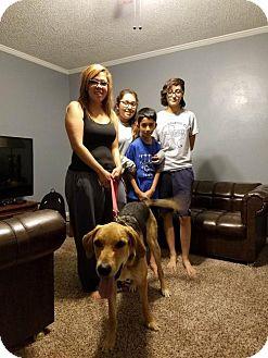 Hound (Unknown Type)/Shepherd (Unknown Type) Mix Dog for adoption in Odessa, Texas - Gizmo