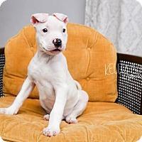Adopt A Pet :: Gibson - Catasauqua, PA