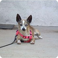 Adopt A Pet :: Pinky - spring valley, CA